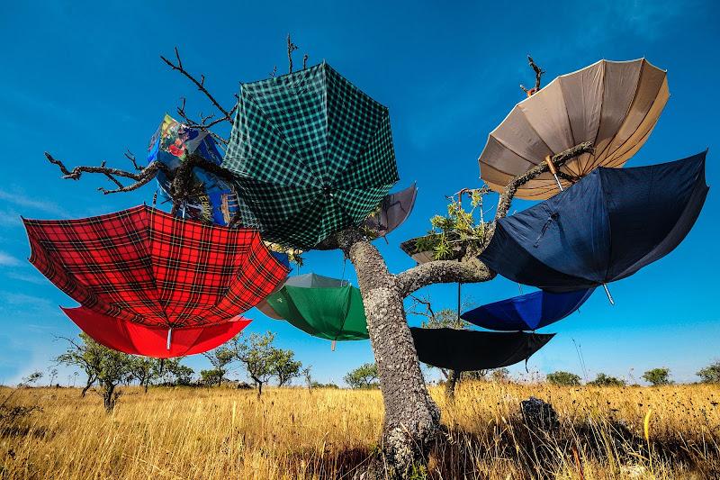Ombrelli stesi al sole di Diana Cimino Cocco
