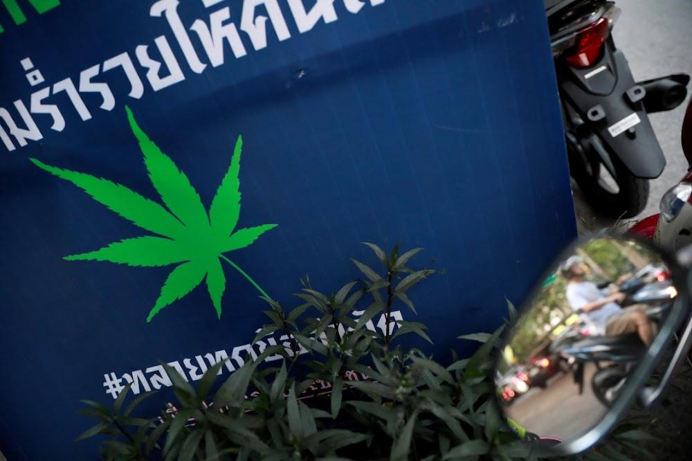Thailand kyk na die voorsiening van cannabis vir beperkte persoonlike gebruik