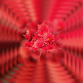 Christmas Flower by Bozica Trnka - Abstract Patterns ( holiday, winter, red, christmas, flower )