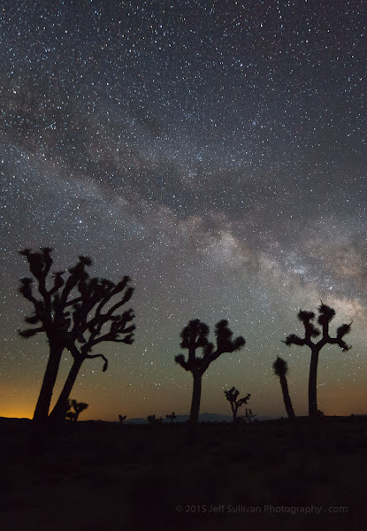 Photo: Night in the Mojave - Joshua trees are an indicator species for the Mojave Desert ecosystem, stretching from Southern California into Nevada, Arizona and Utah.  www.JeffSullivanPhotography.com