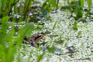 Photo: A more different frog