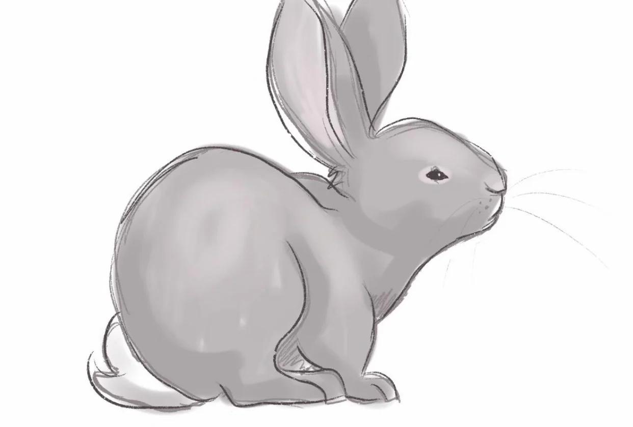 draw legs on a bunny
