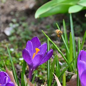 by Ian  Rivera - Flowers Flowers in the Wild