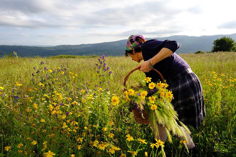 Il profumo dei fiori.... di leonardo valeriano