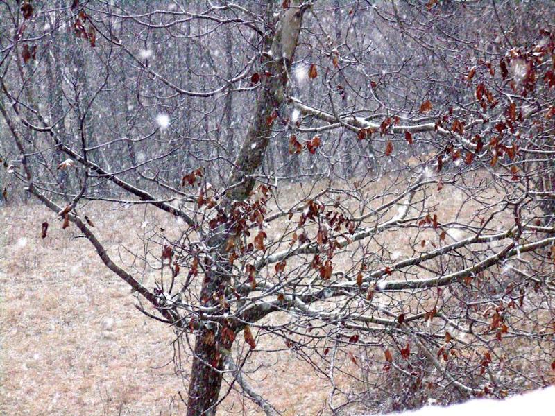 Scende la neve di De90