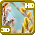 Blooming Willow Catkins Young icon
