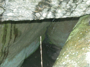 Photo: A spider web in the opening.