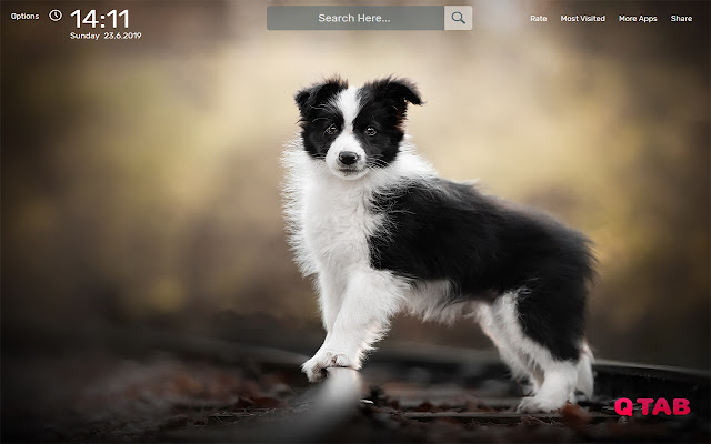 Border Collie Wallpapers HD Theme