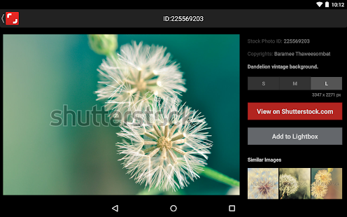 Shutterstock- screenshot thumbnail