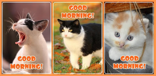 Awesome Good Morning greeting in cats images to share with your friends.
