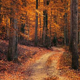 Autumn Walk LXXX. by Zsolt Zsigmond - Landscapes Forests ( path, foliage, fall, nature, foresttrees, autumn, landscape )