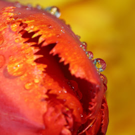 by Josef  Bica - Nature Up Close Natural Waterdrops