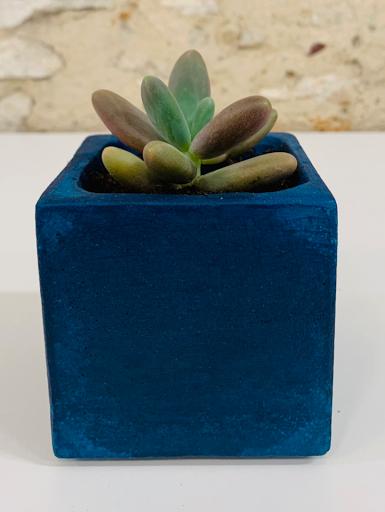 plante dans pot design en béton bleu