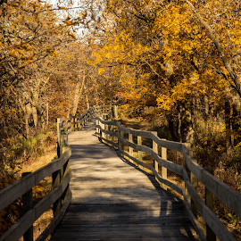 Woodland Boardwalk  by Eric Wellman - Buildings & Architecture Bridges & Suspended Structures ( color, fall, boardwalk )