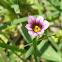 Tiny flower?
