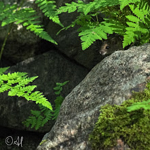 Photo: Mousy beneath the ferns