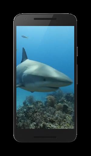 鮫ライブ Wallaper