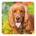 Cocker Spaniel Live Wallpaper icon