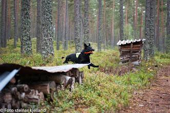 Photo: Rundering på Evje