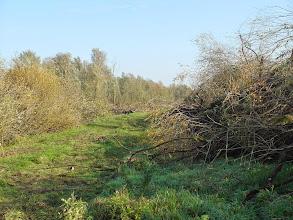 Photo: Weghalen van de bomen voor de nieuwe kreek