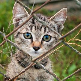 Cute kitty by Istvan Somogyi - Animals - Cats Kittens ( domestic, kitten, cat, animal, kitty,  )