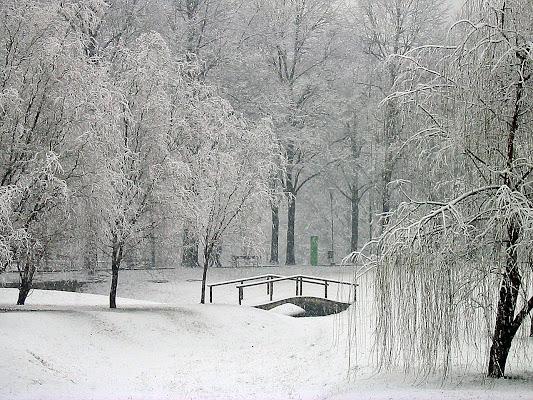 Neve nel parco di MicheleSpadafina