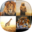 Zoo Live Wallpaper icon