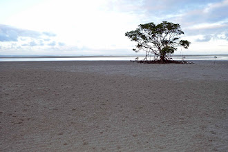 Photo: Low tide at Cape Tribulation. See my video pan, it captures the serenity and all the bird calls!