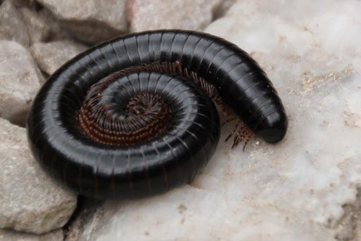 Centipedes Wallpapers in HD
