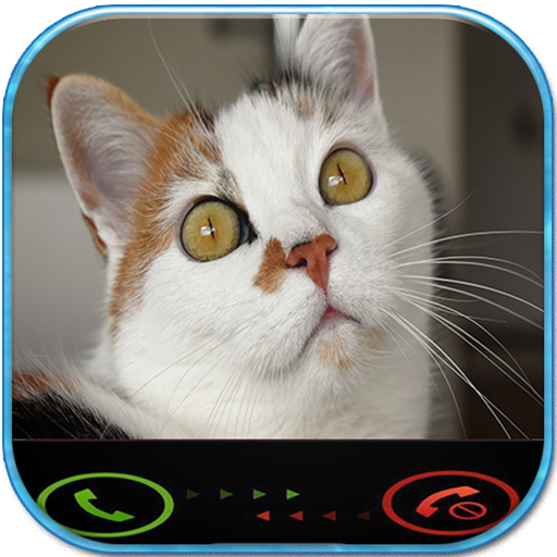 Call From Cat Simulator
