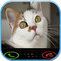 appel simulé chat icon
