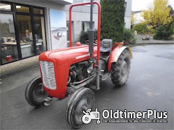 Massey Ferguson MF 35 Narrow