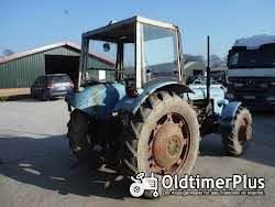 Eicher Buffel 3554 Allrad Foto 5