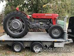 Massey Ferguson MF 65 Multi-Power Foto 2