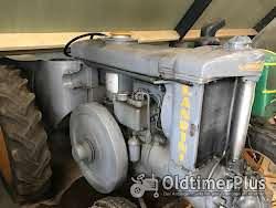 Landini Superlandini Super Landini Oldtimer Traktor Schlepper Glühkopf (testa calda) (kein Velite) Foto 3