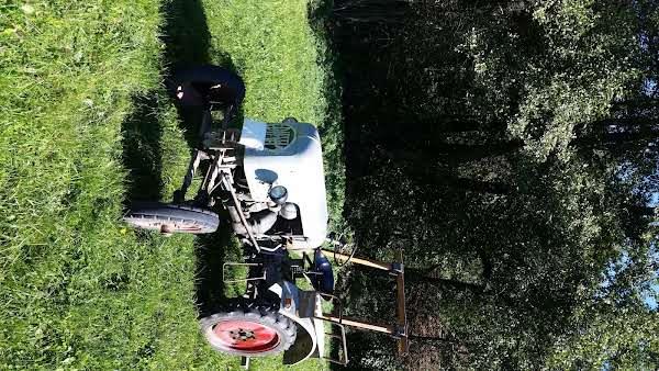 Eicher EKL 11 Oldtimer Bulldog,Traktor,Schlepper im absoluten Originalzustand!!! Foto 1