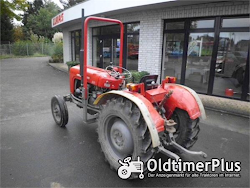 Massey Ferguson MF 35 Narrow Foto 5
