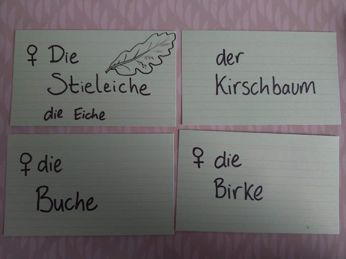 index cards: die Stieleiche, der Kirschbaum, die Buche, die Birke