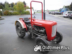 Massey Ferguson MF 35 Narrow Foto 6