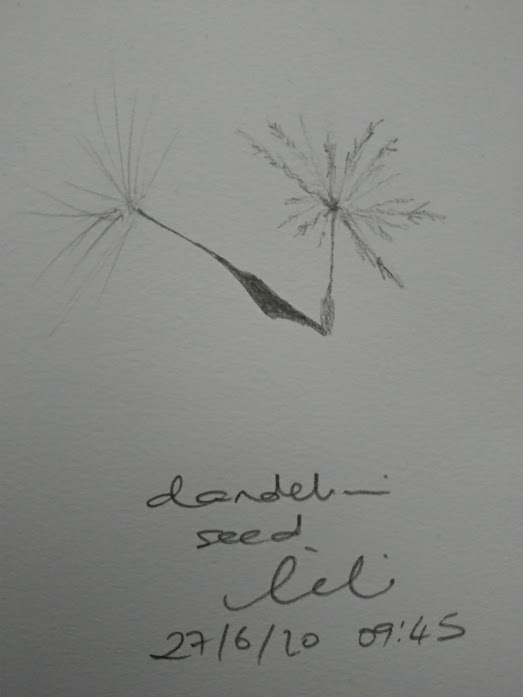 dandelion seed sketch by LiLi