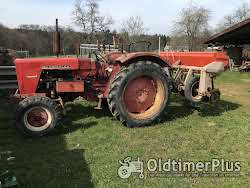 IHC 523