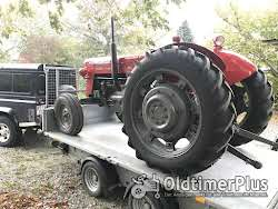 Massey Ferguson MF 65 Multi-Power Foto 4