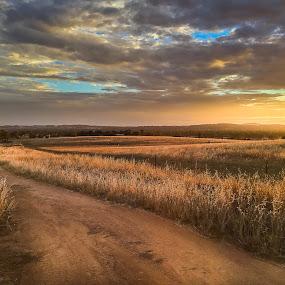 Golden Fields by Daniel Wheeler - Landscapes Prairies, Meadows & Fields ( sunset, australia, cloudy, summer, fields )