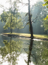 Photo: Misty morning reflection into a pond at Eastwood Park in Dayton, Ohio.