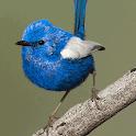 Uluru birds icon