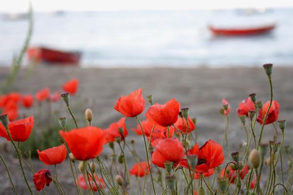 Rosso in spiaggia di Mimmo79