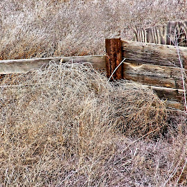 Weeds and Tumbleweeds by Gaylord Mink - Buildings & Architecture Decaying & Abandoned ( fence, wood, weed, tumbleweeds )