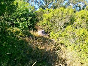Photo: Eucalyptus stump.