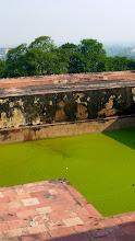 Photo: Für 100 Rupien sprang er in die grüne Brühe