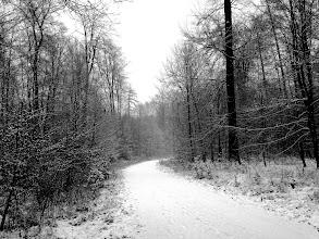 Photo: The way  for #curvyfriday by +Lorena Masiand +Peter From for #hqspmonochrome // +HQSP Monochromeby +Blake Harrold// +Trever McGhee// +John Minor// +Rinus Bakker for #hqsplandscape // +HQSP Landscape for #fotoamateur // +Fotoamateurby +Britta Rogge// +Karsten Meyer// +Scotti van Palm// +Markus Landsmann// +Remo Primatesta #landscapephotography // +Landscape Photography